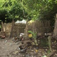 Enam Fakta Menarik Desa Trunyan Bagian 3 – Tamat