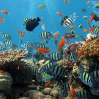 Cari Diving Spot Paling Indah? Indonesia Juaranya!