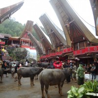 Kematian Mewah dari Tana Toraja