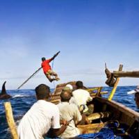 Bagian 3 (Tamat) Lamafa ; Para Pendekar Paus Perairan Laut Savu